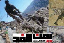 """صورة """"يمن الغد"""" يفتح ملف الاصطياد الجائر للحيوانات النادرة والمهددة بالانقراض في اليمن"""