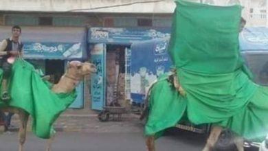 صورة الحوثيون يحتفلون بالمولد النبوي بصورة اشبه بأفلام الرعب والحقب الغابرة