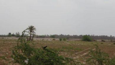 صورة المليشيا تقصف الاحياء السكنية جنوب الحديدة